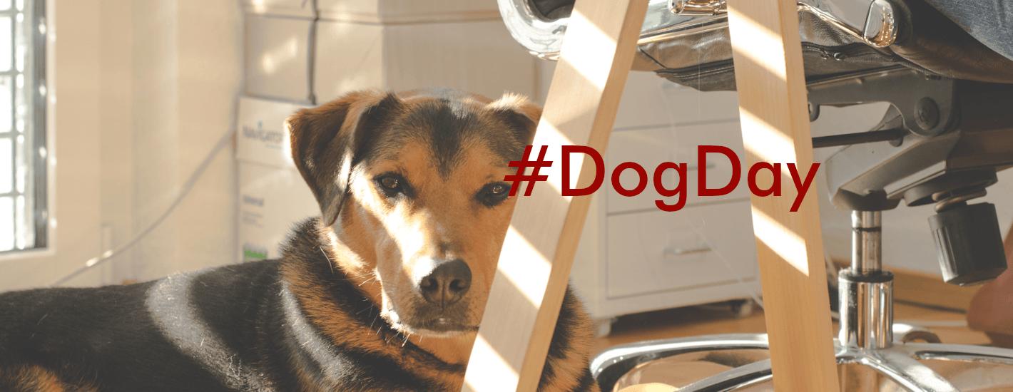 mascotas a la oficina muestra un perro descansando al lado de su amo